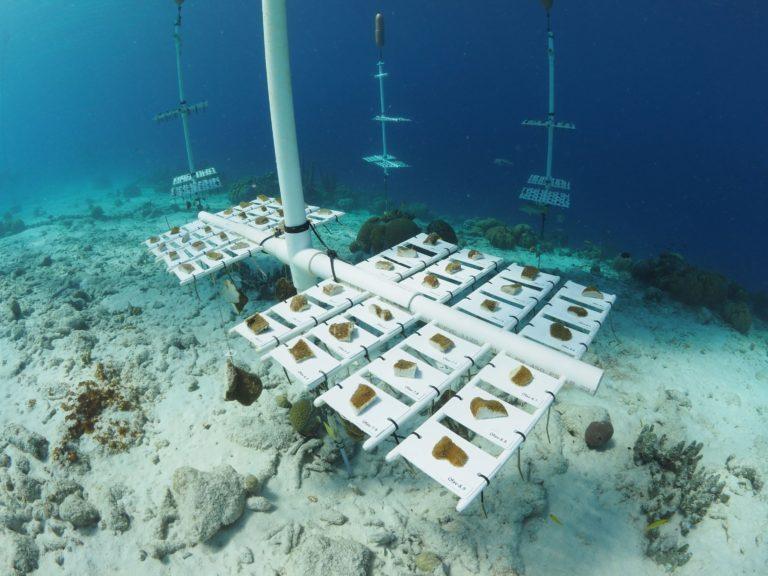 A Boulder Approach to Reef Restoration