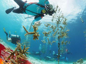 Reef renewal bonaire