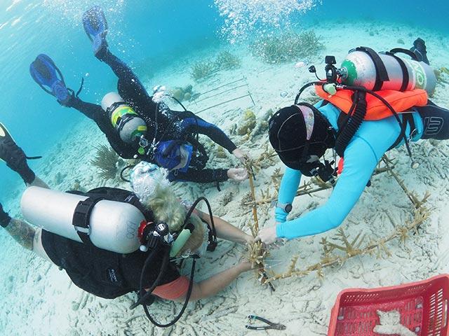 reef Maintenance and Monitoring