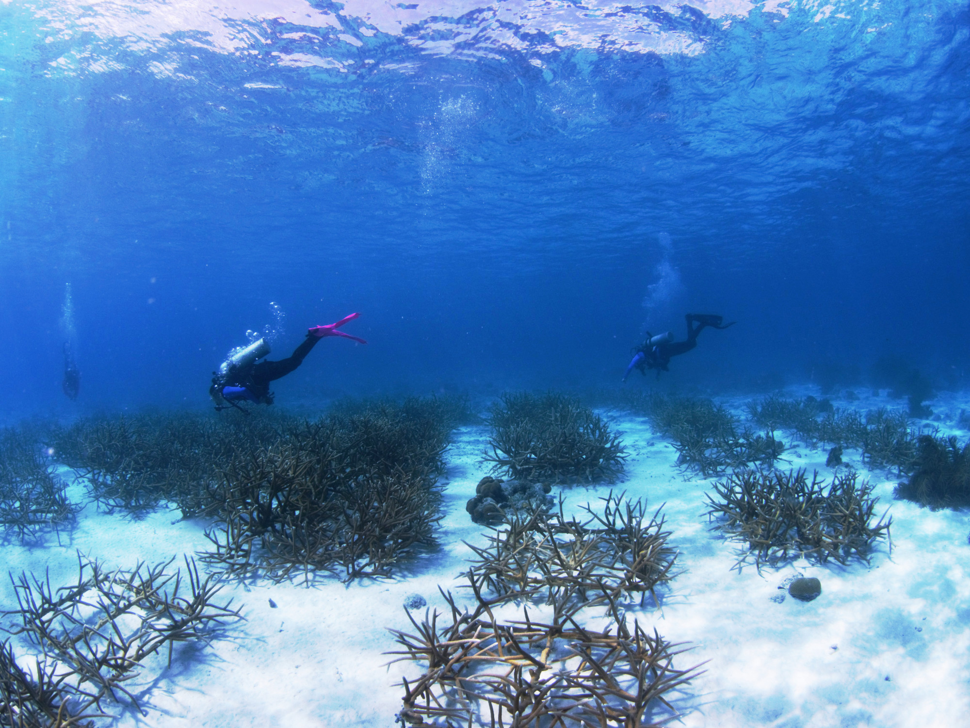 reef renewal bonaire foundation