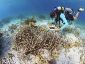 Anne counting coral recruits