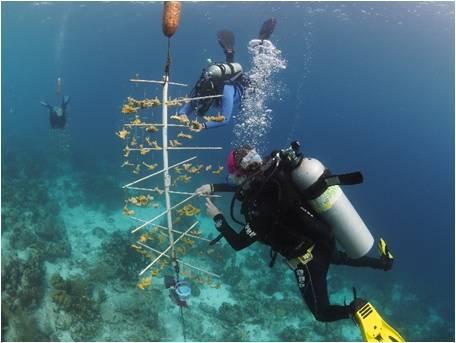 Reef Renewal Foundation Bonaire (formerly Coral Restoration Foundation Bonaire)