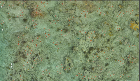 A portion of the orthomosaic created post-outplanting. Outlined in red, you can see the individual outplanted coral colonies and in blue you can see the lone pre-existing wild colony.